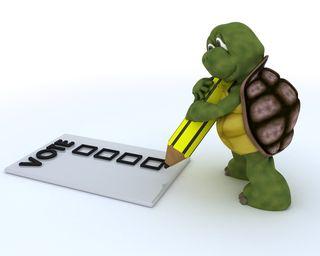 Voting Turtle